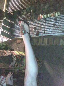 grill und bein